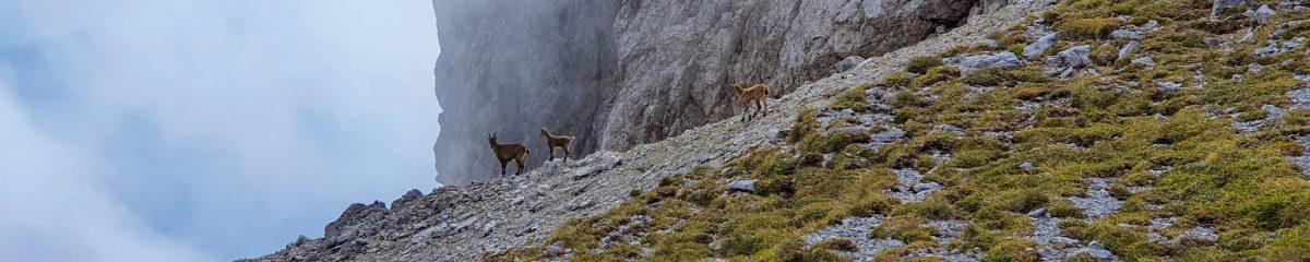 Bergsteigen: Bodenbauer – Hochschwab – Schiestlhaus – Rauchtal